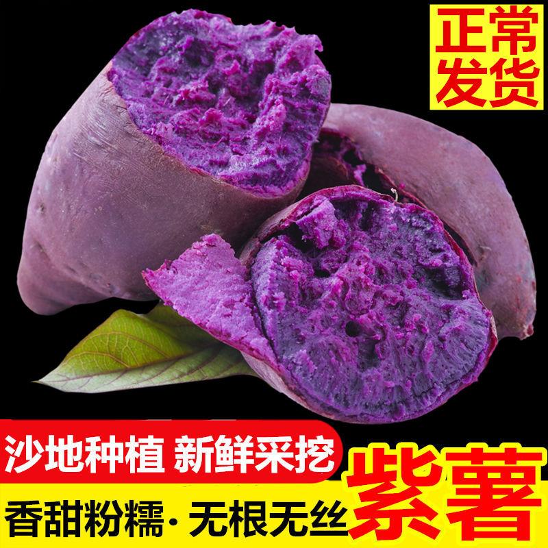 【香甜粉糯】沙地紫薯新鲜 番薯板栗红薯地瓜蜜薯蔬菜(2/5/10斤)