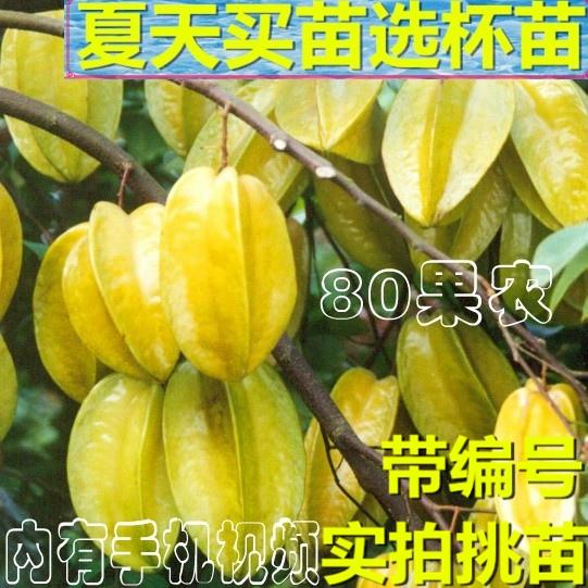 Садовые растения / Деревья / Фруктовые деревья Артикул 619107420519
