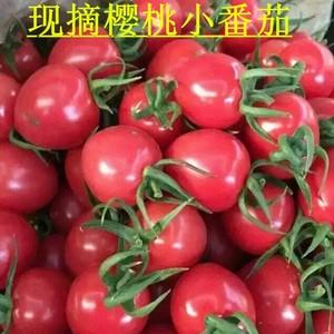 养乐派新鲜现摘樱桃小番茄圣女果