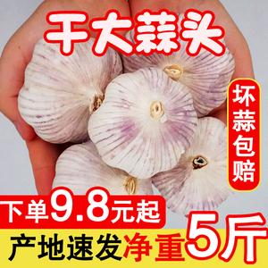 精品干大蒜头新鲜干蒜5斤紫白皮