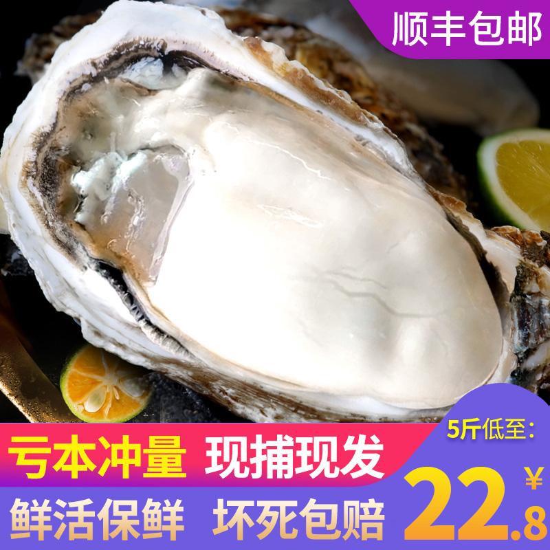 乳山生蚝鲜活5斤海鲜水产海蛎子贝壳新鲜牡蛎带壳10斤特大一箱