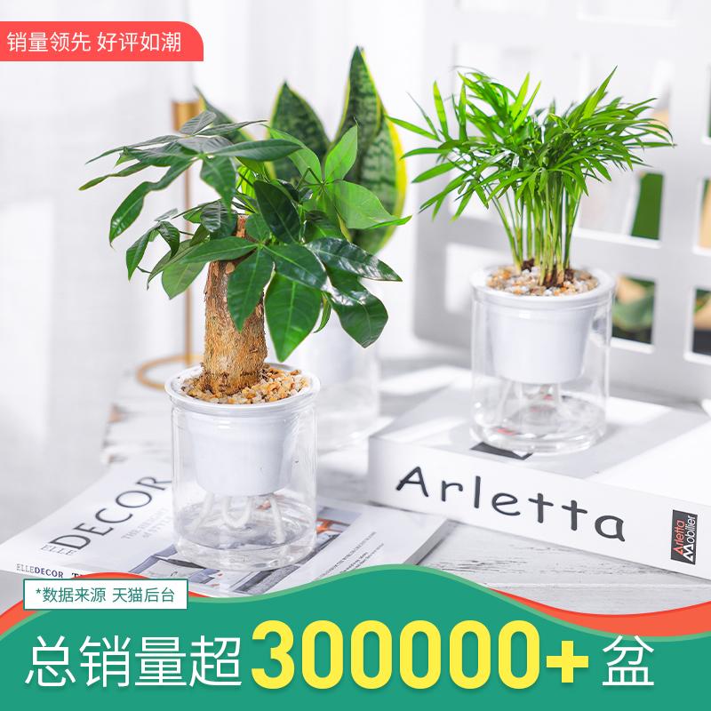 室内办公室水培植物发财树盆栽花卉
