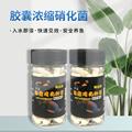 硝化细菌鱼缸水族箱硝化菌干粉鱼缸水质净化消化细菌硝化细菌
