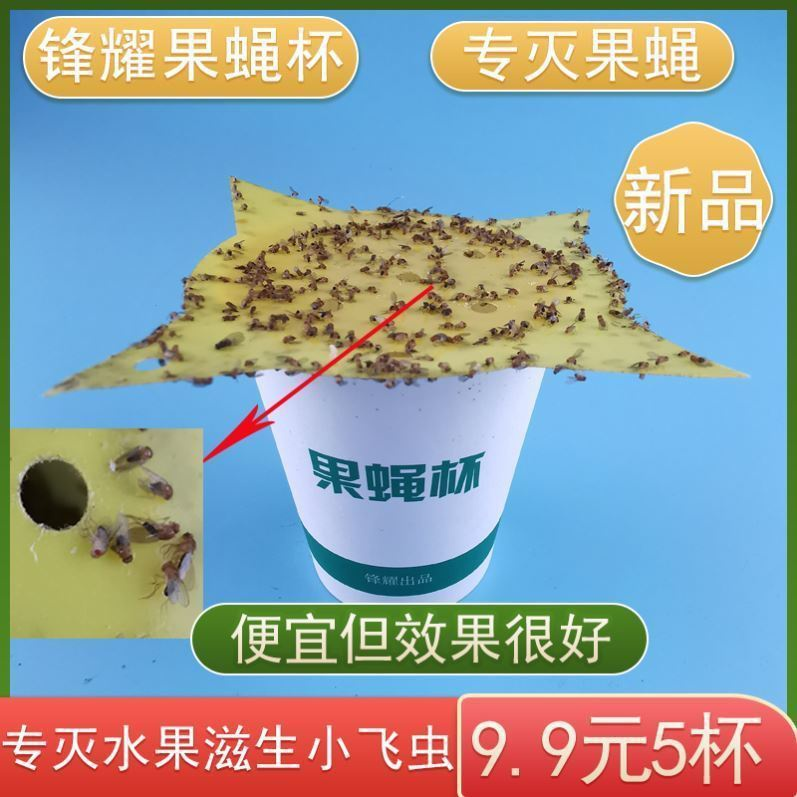Trap and catch flies fruit fly I fly remover kitchen fruit fly killer stick cup indoor catch small