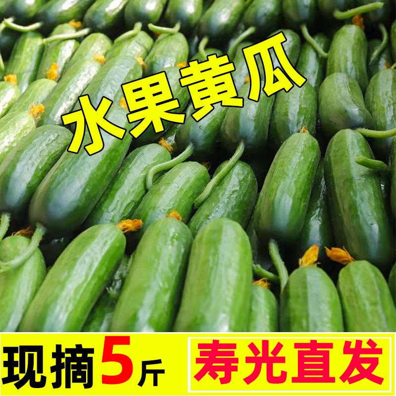 新鲜水果小黄瓜现摘黄瓜蔬菜小青瓜荷兰蔬菜农家脆嫩生吃整箱5斤