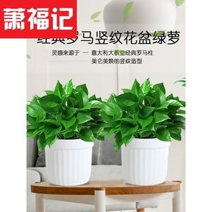 除甲醛净化空气绿萝盆栽室内植物花卉绿植绿箩净化空气水培盆栽