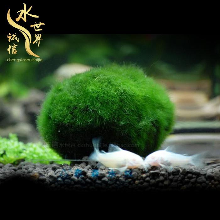 草の球体の裸の水草のかめのエビの水草の水晶のシリンダーの毛の熱帯の緑の藻のシリンダーのエビの藻種類の植物のボールをかって郵送します。