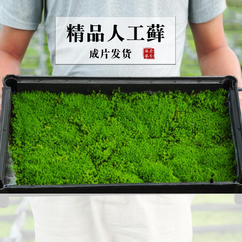 生きている砂苔の庭は盆栽の小さい景観を緑化して、水陸かめの築山を植えて、新鮮な苔を作ります。