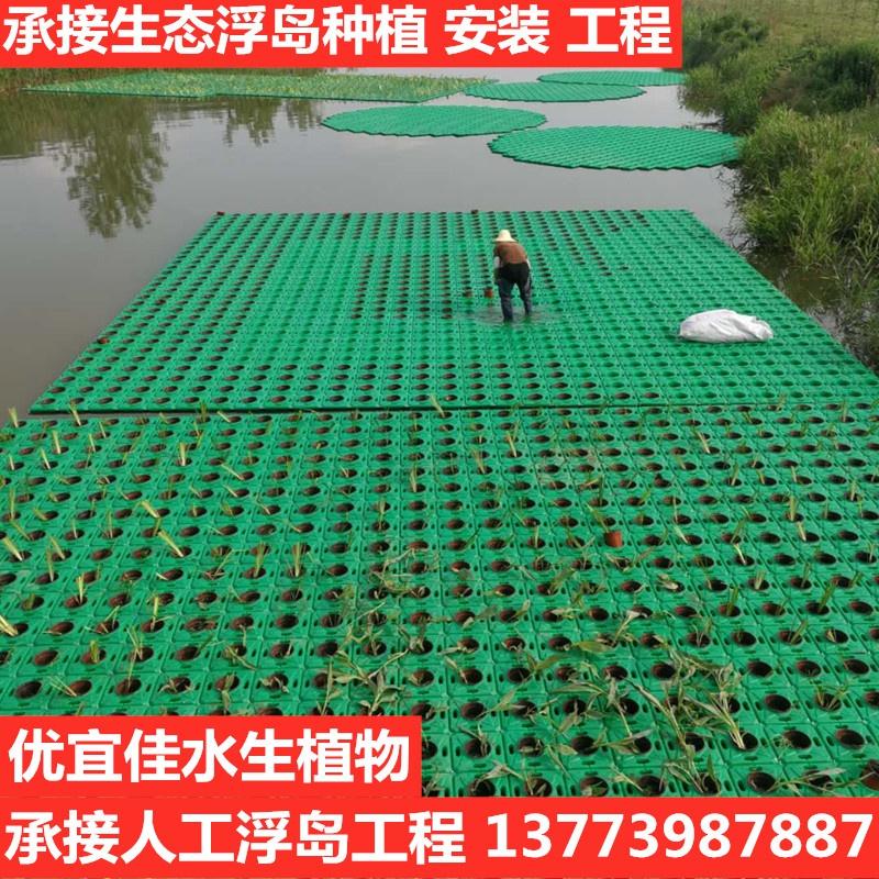 生态浮岛人工浮床河道治理修复水上种植绿化景观水生植物净化水。