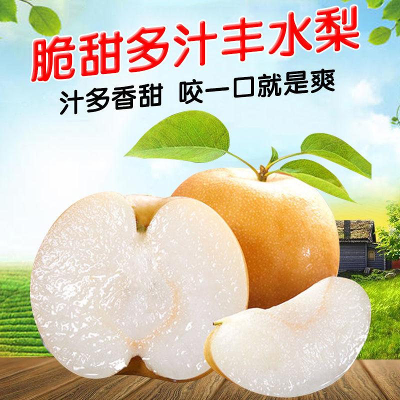 丰水梨10斤秋月梨子水果新鲜非雪梨果酥梨皇冠梨脆甜秋月新高梨子