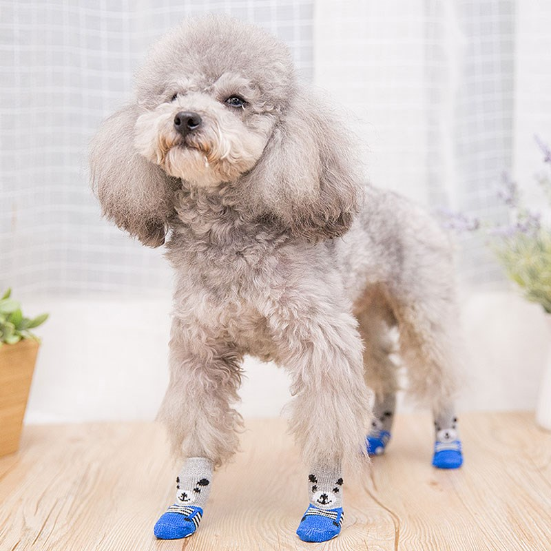The dirty kitten Baodi cant prevent the small bear catching dog from falling off his shoes. Its better to protect his feet than wearing an anti pet condom.