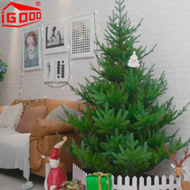Igood Christmas tree 1.5 meters 1.8 meters green household package luminescent luxury encryption Simulation Festival tree English
