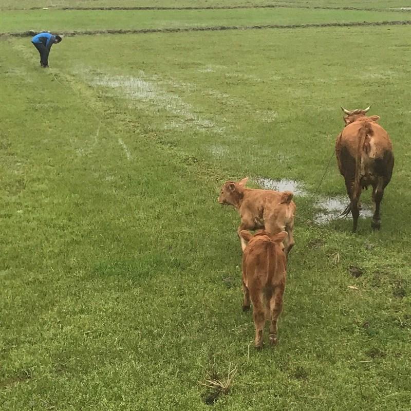 拴牛栓牛拴马桩栓大拴犬养地钉牛B羊桩帐篷狗棚牛用的地桩畜牧桩