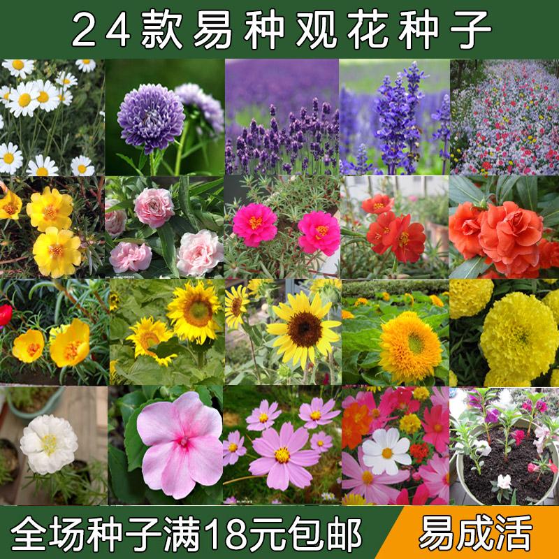 花�N子四季播易活�蚊草薰衣草太�花�f�劬找盎ㄆ卟束P仙花向日葵