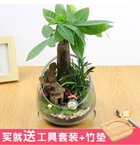 Moss Micro Landscape eco-bottle creative combination plant rich tree DIY desktop potted office decoration