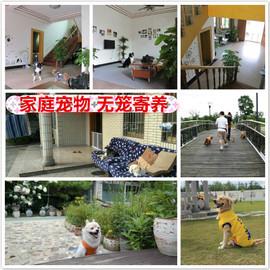 上海家庭宠物寄养 无笼寄养 托管  狗狗寄养 别墅散养 假日预定图片