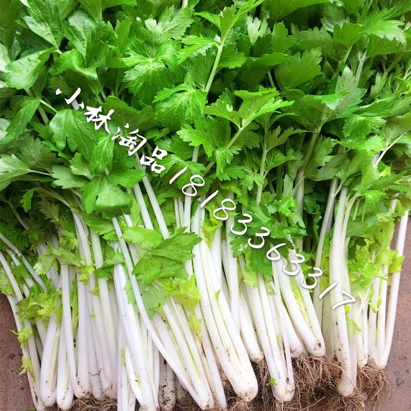小林淘品白芹菜新鲜农家自种新鲜蔬菜勤青菜四川乐山犍为5斤包邮