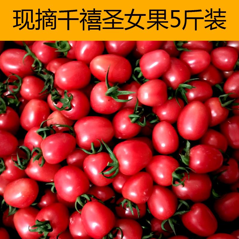 千禧圣女果新鲜小番茄水果小柿子樱桃番茄西红柿现摘现发5斤包邮
