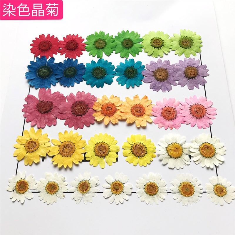 白晶菊のヒナギク押花の手作りトリートメントDIYアクセサリー携帯ケースネットの赤い化粧presed flowers