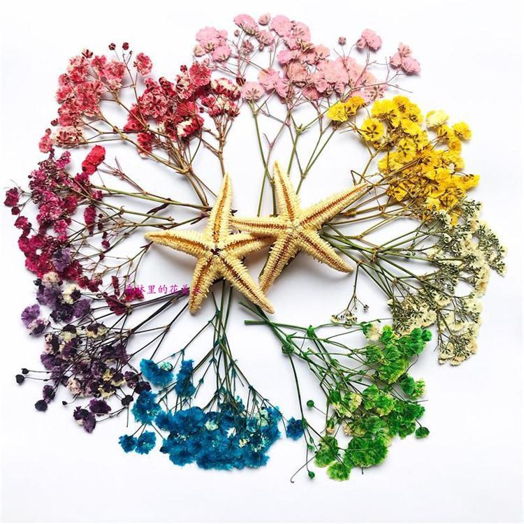 満天の星の小満の乾花植物の標本DIYハンドメイドのペクチンの携帯電話の殻は花のネイルの額縁をおさえて材料を押しつぶします