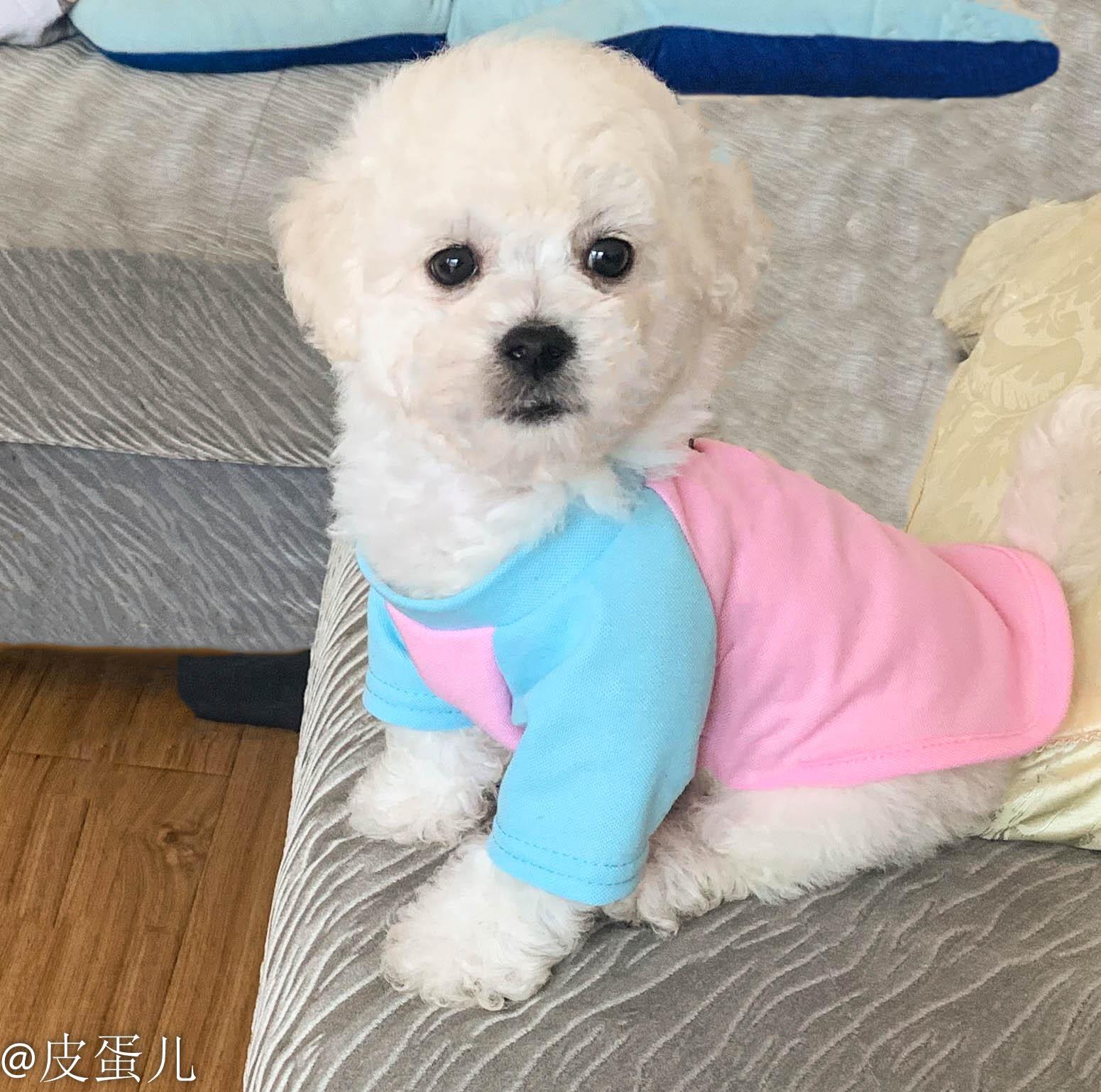 中國代購 中國批發-ibuy99 小狗衣服 春夏狗狗猫咪通用法斗泰迪小型犬背心新款比熊博美小狗宠物衣服