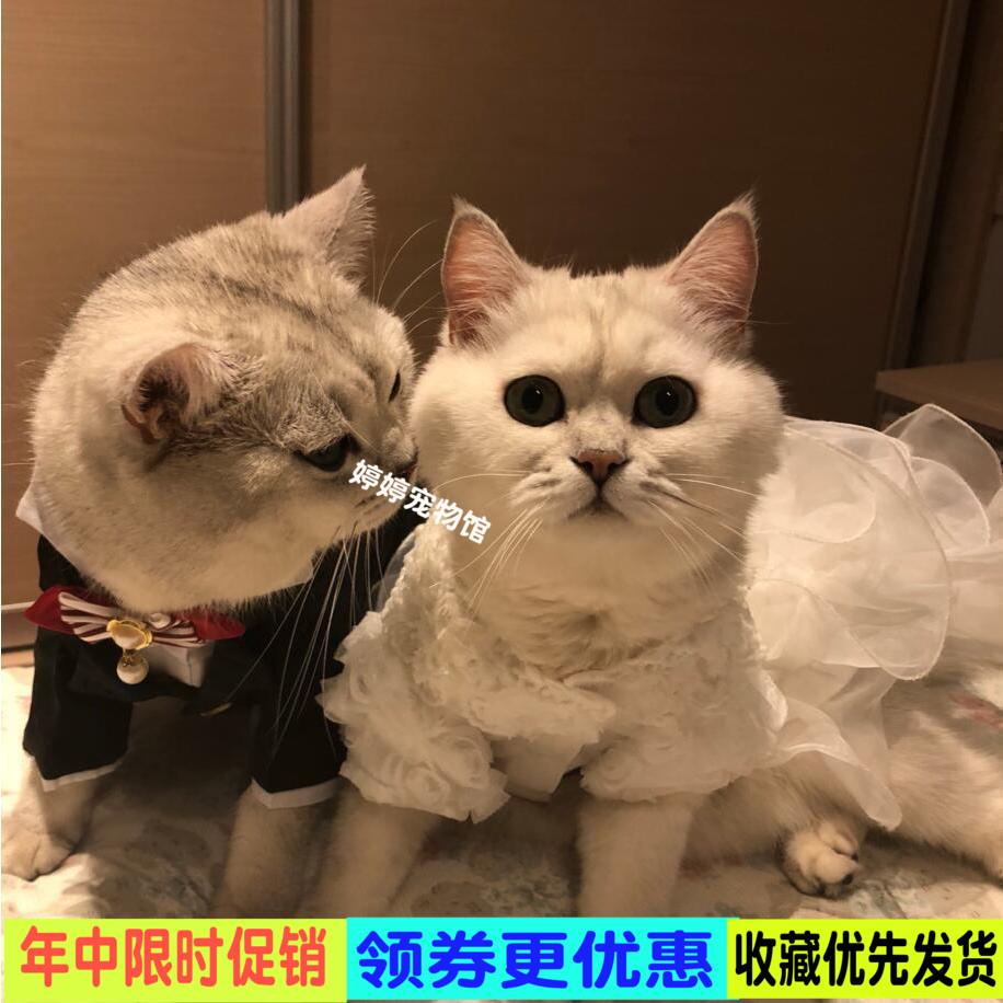 猫西装绅士礼服婚纱猫咪公主裙春秋宠物狗过年西服小型犬燕尾衣服