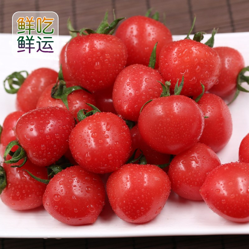 现摘圣女果孕妇包邮五斤千禧圣女果新鲜西红柿孕妇水果樱桃小包邮