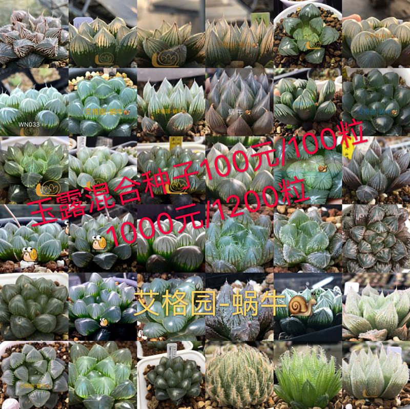 A paradise for snails in egger Garden