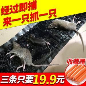 老鼠贴超强力粘鼠板家用灭鼠器连续高效捕鼠神器抓大老鼠耗子贴
