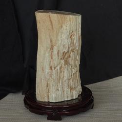千蕊天然树化石树化玉摆件原矿 木化石硅化木 原石皮 一物一图