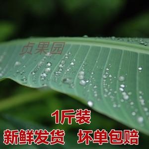 广西特产芭蕉叶新鲜现摘香蕉叶