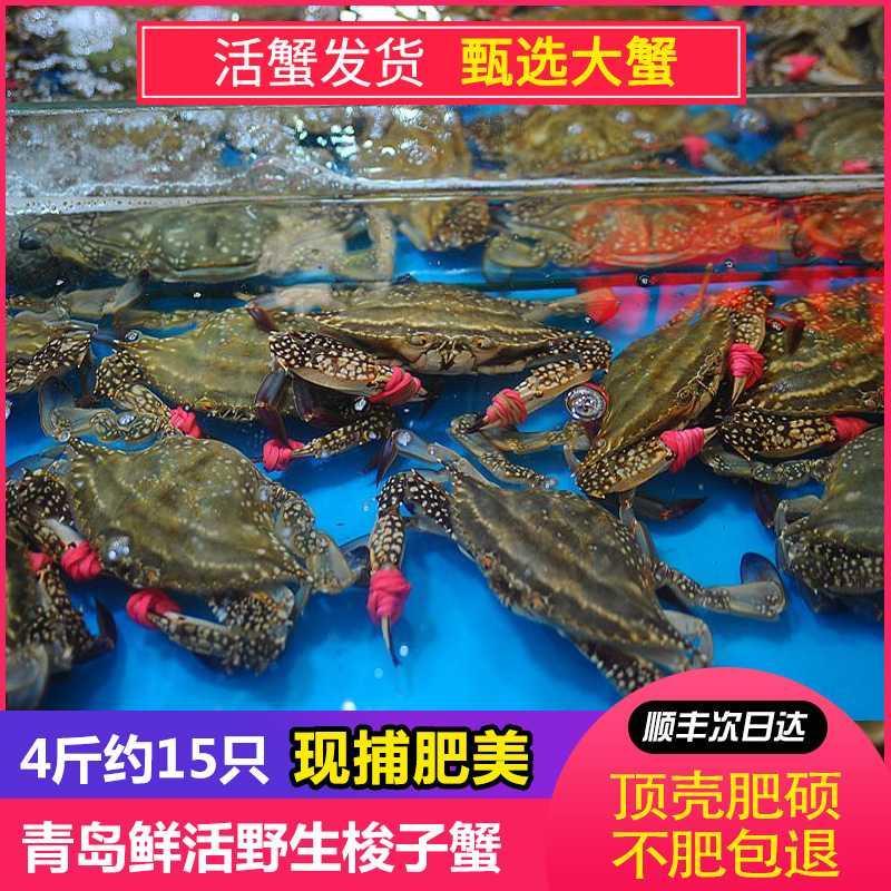 云中青岛梭子蟹鲜活海鲜大螃蟹水产舟山公梭子蟹搭配混发四斤包邮