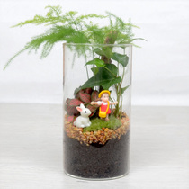 Moss Micro landscape Ecological Bottle Creative Mini plant small potted glass office bonsai DIY Dragon Cat Pendulum