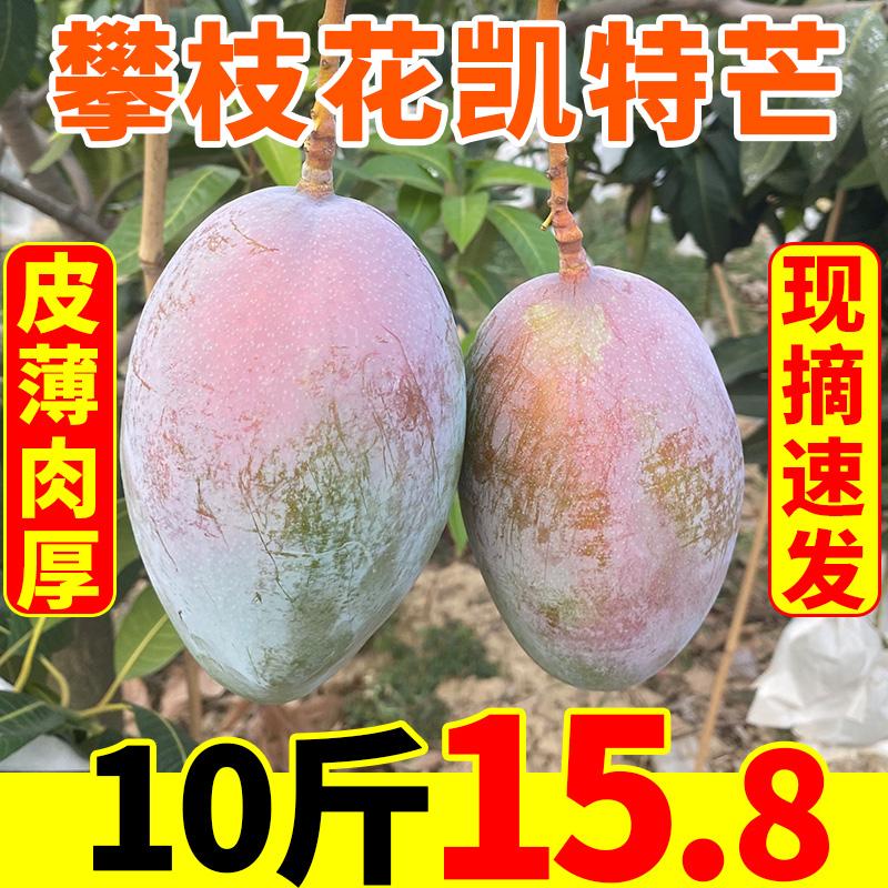 四川攀枝花凯特芒果新鲜10斤包邮当季水果大青整箱应季甜芒果新的