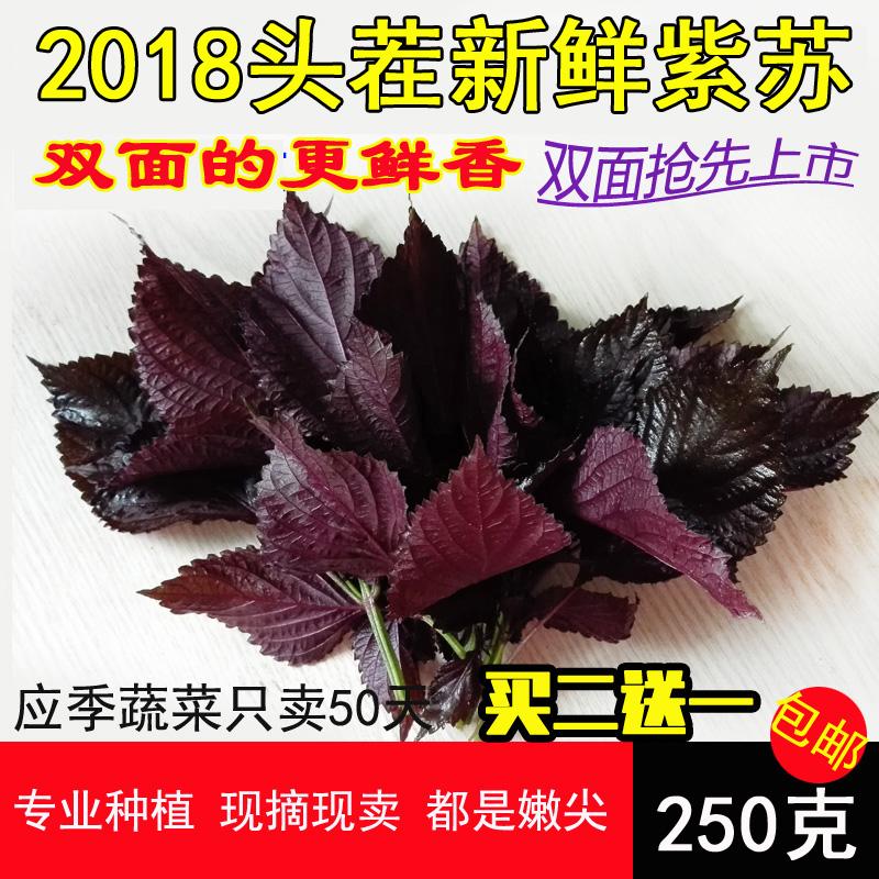 Теперь выбор Su Ziye farmhouse новый Свежие листья базилика до кипящей рыбы, креветок, крабов, специй, базилика, сушеный выбор 250G