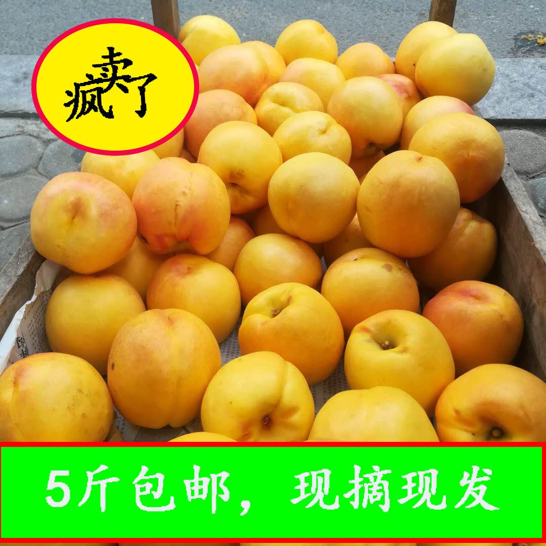 黄金油桃现摘现发新鲜水果水蜜桃现货孕妇5斤包邮脆甜烟台特产