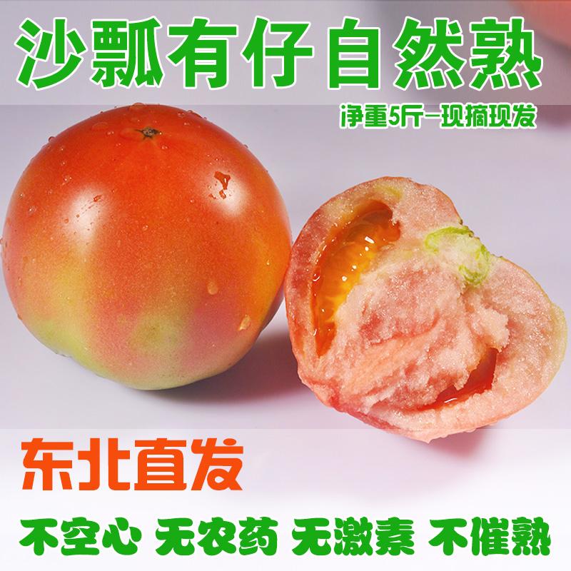 东北西红柿自然熟新鲜番茄现摘现发5斤装甜脆好吃包邮特产老品种