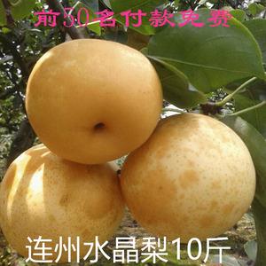 连州水晶梨高山翠冠梨特产农家新鲜现摘大果皮薄脆甜爽口无渣