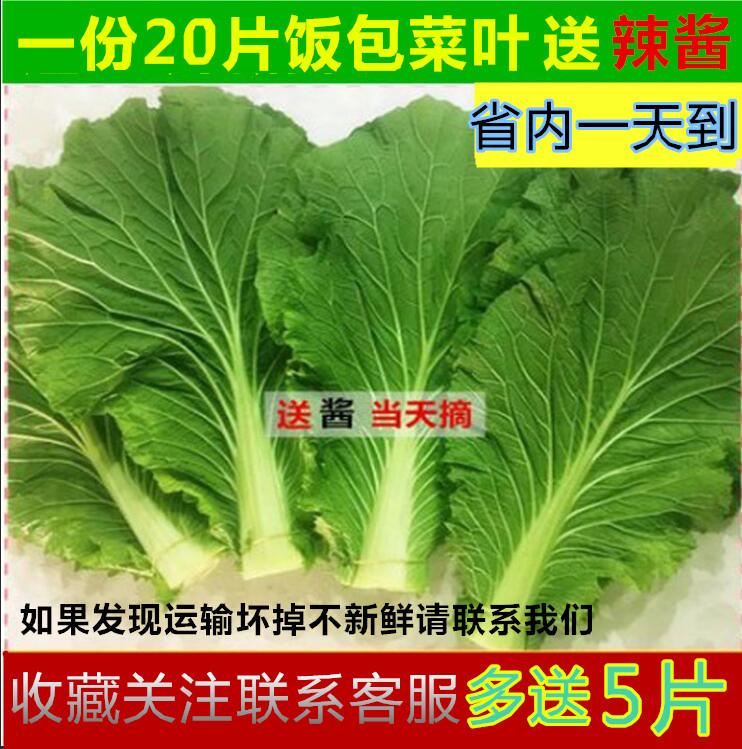 东北新鲜打饭包白菜叶送苏子叶包饭包菜叶绿色新鲜农家种蔬菜包邮