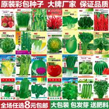 蔬菜種子四季播種陽臺農家庭院盆栽生菜菠菜韭菜香菜草莓籽孑包郵