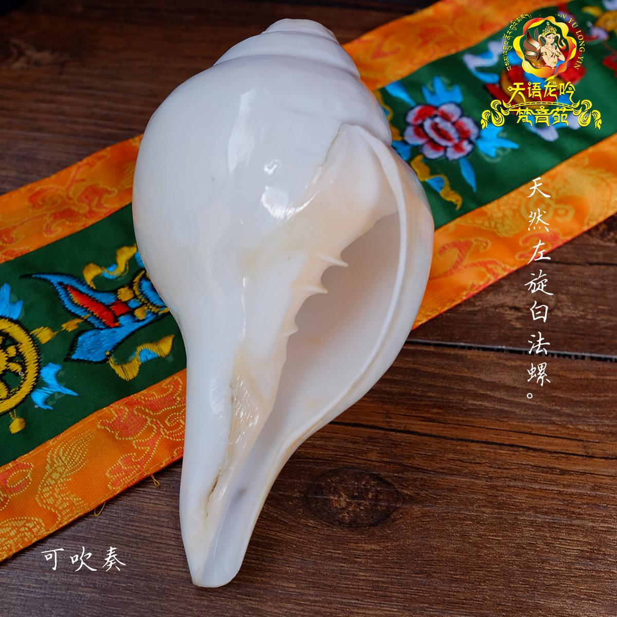 印度白海螺尼泊尔八吉祥八供法螺可吹奏左旋密宗法器 Изображение 1