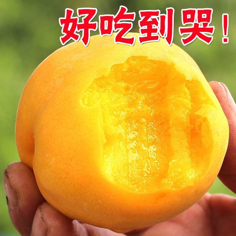 现货现摘正宗无锡阳山水蜜桃子水果新鲜孕妇脆当季软黄桃5斤奉化