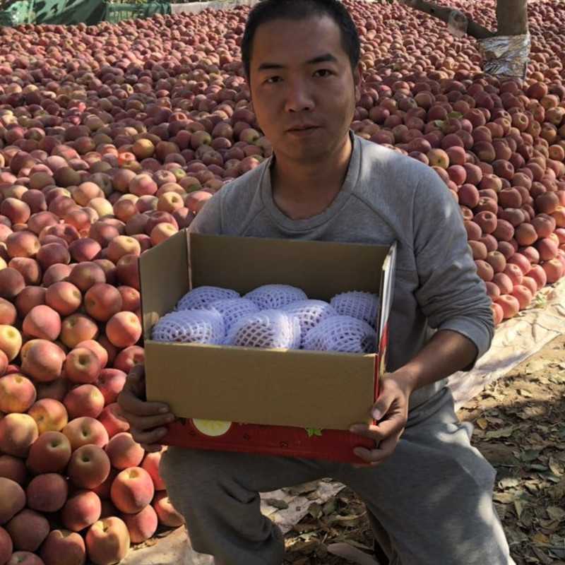 Xinjiang Aksu bingtangxin apple is fresh in the season, and it is suitable for all ages to pick and post