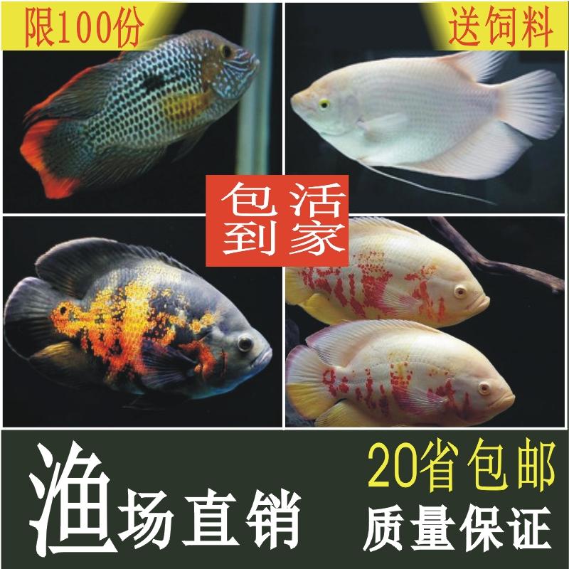 Рыбы Артикул 585261192236