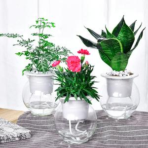 绿萝发财树芦荟吊兰栀子花富贵竹绿植办公室盆栽花卉室内水培植物