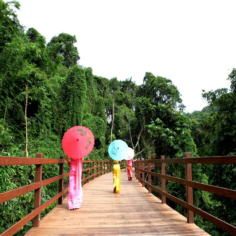 云南西双版纳旅游新款推荐野象谷原始森林公园直通车纯玩一日游