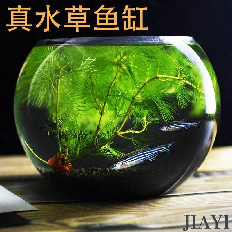 12月02日最新优惠水培装饰套餐客厅玻璃金鱼缸造景
