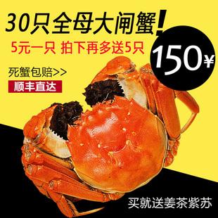 抢东胜水产30只5元全母大闸蟹洪泽湖鲜活河蟹满黄现货死蟹包邮