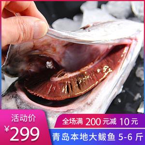 领10元券购买青岛沙子口海捕鲅鱼新鲜海鱼大马鲛鱼水产鲅鱼水饺馅5-6斤一条