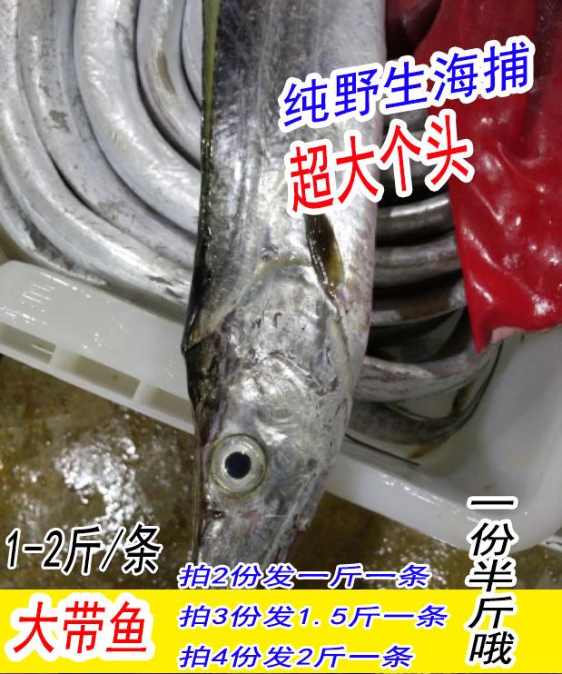 海鲜水产东海大带鱼 一条1斤到2斤纯野生海捕本地吊带鱼 三斤包邮